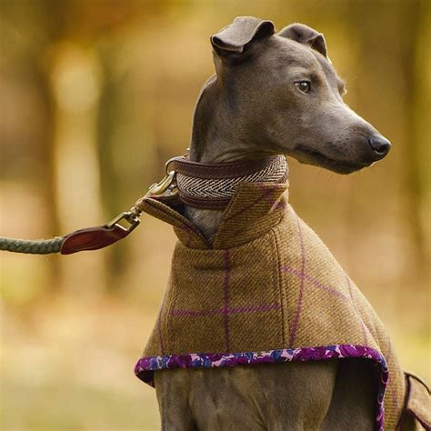 pattern greyhound coat dog coat pattern by redhound for dogs notonthehighstreet com
