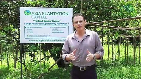 agarwood youtube asia plantation capital agarwood youtube