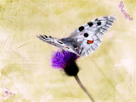 tekening vlinder met bloem gratis afbeeldingen bloesem vogel vleugel wijnoogst