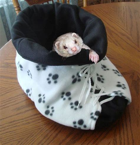 ferret bedding how to make a ferret shoe bed ferrets magazine for the