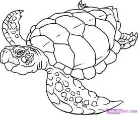 sea coloring pages sea turtle coloring pages coloring home