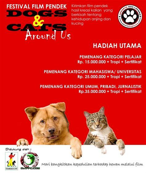 film animasi kucing terbaik festival film pendek anjing kucing berita umum