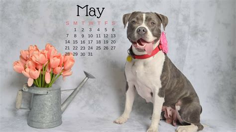 saved by dogs may 2012 blog