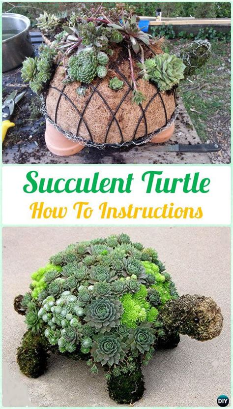 how to make a succulent turtle diy indoor outdoor succulent garden ideas instructions
