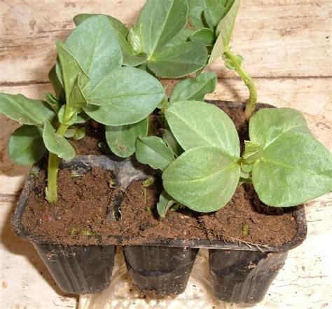 piantare patate in vaso tutte le semine nell orto di febbraio seminare le patate