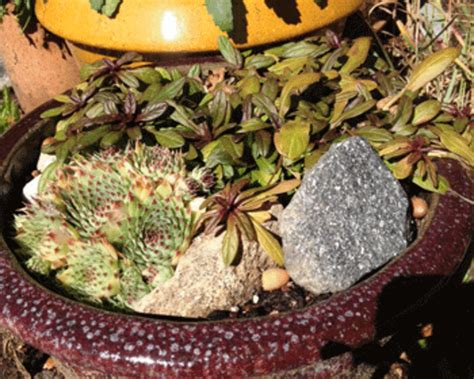 potted perennials survive winter   methods