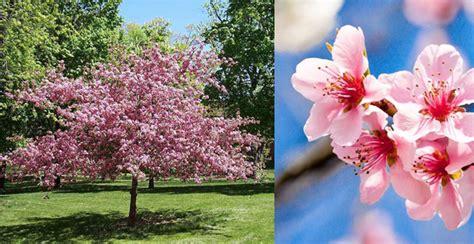 grossi fiori da giardino come scegliere gli alberi giusti per piccoli giardini