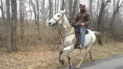 Speed Racking Standardbred Horses For Sale by Speed Racking Standardbred Zeus For Sale