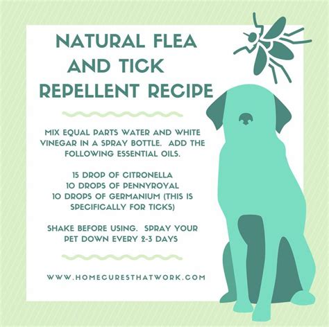 best 25 flea repellant ideas on