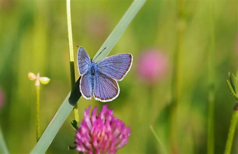 green butterfly wallpaper funny animal green grass butterfly macro wallpapers and images
