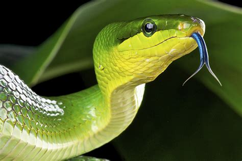 Snake Day by Happy World Snake Day New Reptile Shows