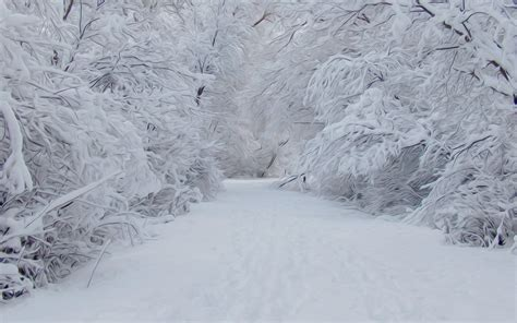 snow images winter images snowy snow hd wallpaper and background