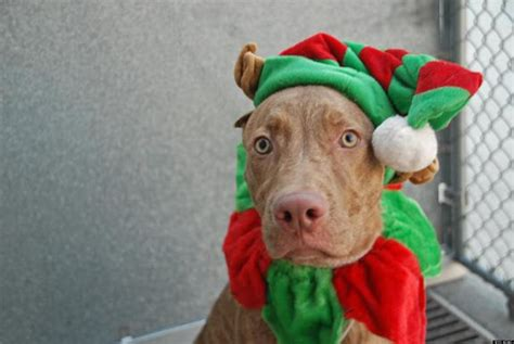 adopt a puppy nyc adopt a pet in new york city featured animals for 12 21 2012 courtesy of nyc s