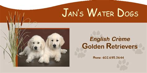 how to a golden retriever to hunt golden retriever dogs in our
