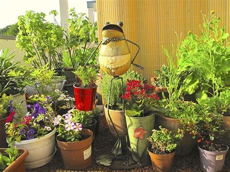 lavori in giardino lavori di febbraio in giardino