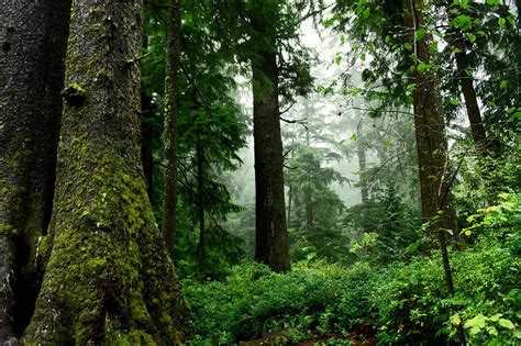 us map oregon state file old growth forest scenic jpg wikimedia commons