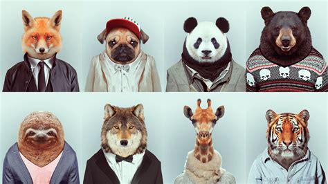 Pet Clothes Animal animals in clothes search animals in clothes