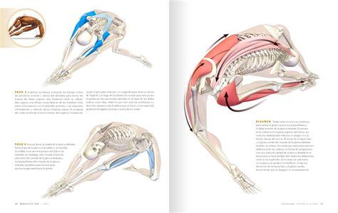 anatoma para vinyasa flow anatom 237 a para posturas de apertura de la cadera y de