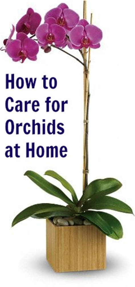 how to care for orchids at home crafting for holidays