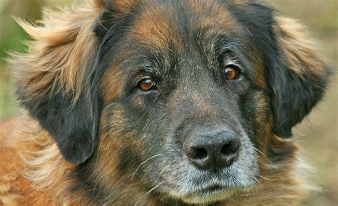 malattia di berger alimentazione sid il usato per gli esperimenti di un veterinario