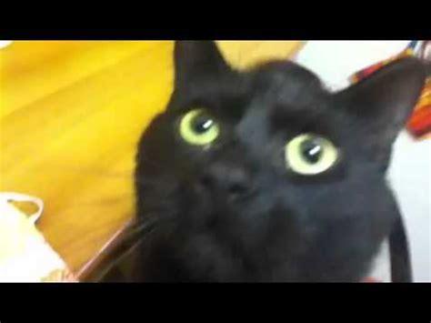 mi colega dice calistenia vs il mio gatto mi dice ciao
