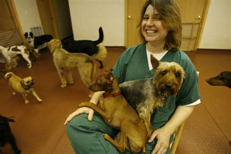 Doggie Day Care Murder doggie day care houston chronicle