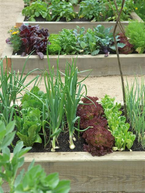 Raised Garden Bed Planting Ideas Raised Bed Gardening Ideas Hgtv