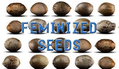 x seeds for sale seeds for sale with best picture collections