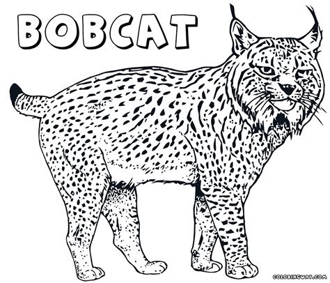 bobcat coloring page lynx coloring pages coloring pages to download and print