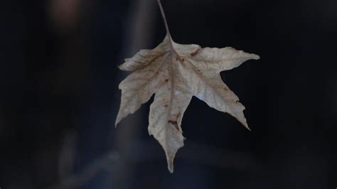 themes of the story last leaf what is the theme of the story quot the last leaf