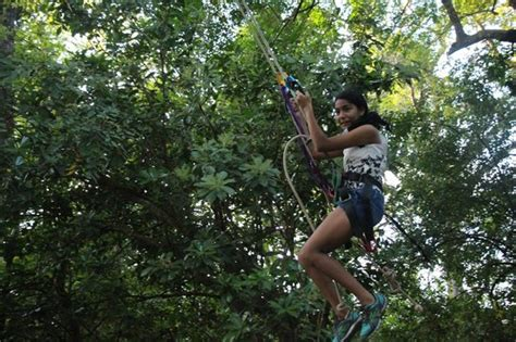 tarzan swing tarzan swing picture of monkey jungle canopy tour
