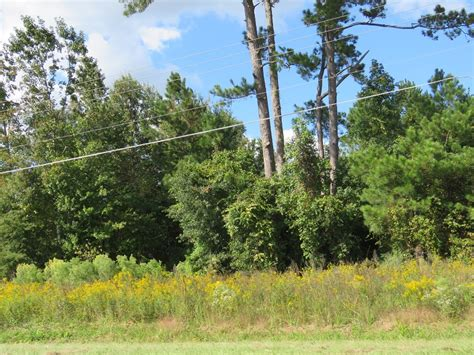 land and timber 49 46 acres of and timber land for sale in