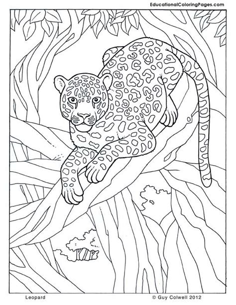 jungle animals for kids coloring pages