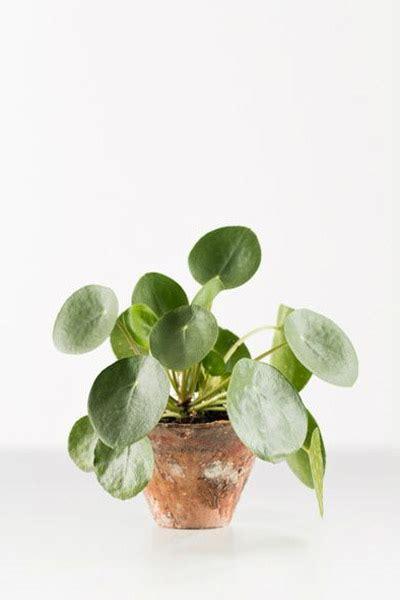 Mooie Planten Voor Binnen by De Mooiste Hangplanten Voor Binnen En Buiten Praxis