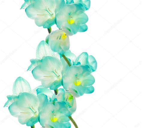 fiore designs fresia flower border design stock photo 169 piotr