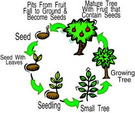 science year 3 life cycle of a plant