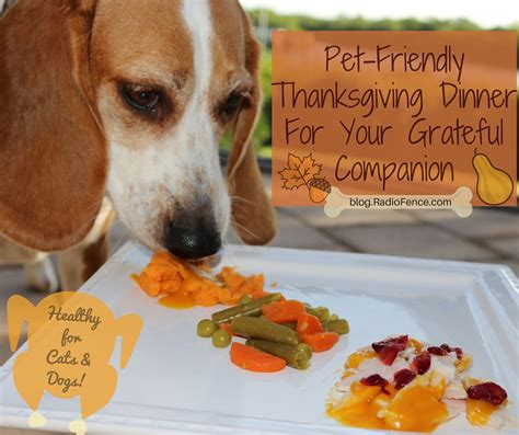 dogs diner radiofence thanksgiving dinner recipe for your and cat