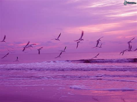 imagenes de karma bird fly stormo di uccelli