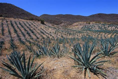 the mezcal experience a field guide to the world s best mezcals and agave spirits books mezcal the spirit of mexico fodors travel guide