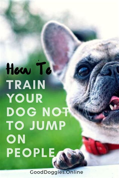 how to your not to jump on visitors 1000 images about on barking diy toys and agility