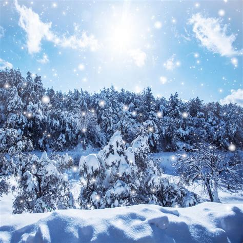 frosty forest royalty free stock snowfall in the woods royalty free stock photography