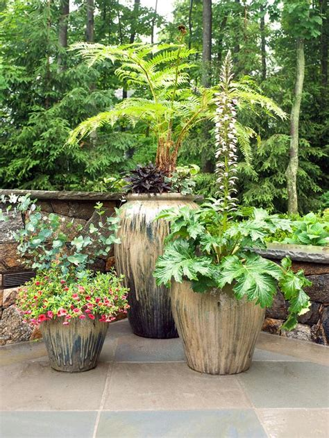 best patio trees exceptional best patio plants 3 potted patio plants newsonair org