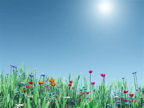 Simple Flower Garden Free Ppt Backgrounds For Your Flowers Garden Powerpoint Templates Flowers