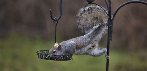 feeding birds not squirrels in fall and winter seasons