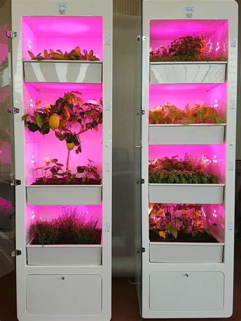 serra da appartamento oh miobio la serra da appartamento per coltivare il