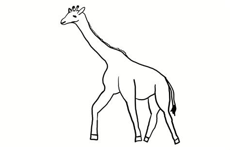 giraffe template free coloring pages of giraffe outline