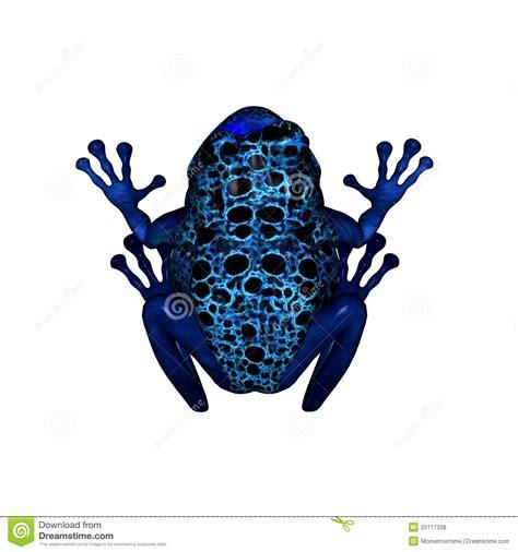 shareholding pattern of blue dart blue poison dart frog royalty free stock photos image
