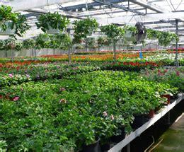 garten gewächshaus rothe gartenbau berlin premium g 228 rtnerei floristik