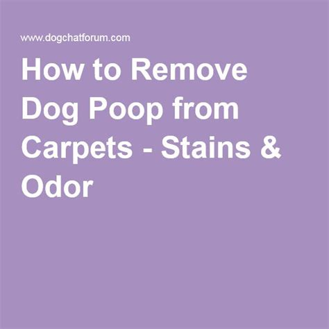 how to remove dog smell from house 1000 ideas about remove dog odor on pinterest dog urine pet odors and pet odor