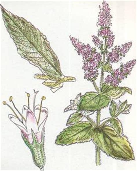 i fiori semplici onlus noixlucoli onlus le piante giardino della memoria la